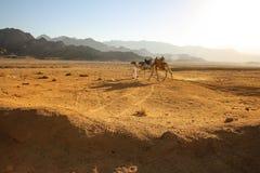 Arabska pustynia w Egipt sharm el shiekh Obraz Stock