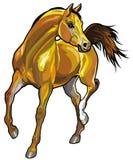 Arabski koń Obraz Royalty Free