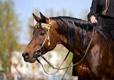 arabski koński jeździec Fotografia Stock