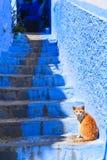 Arabski kot w Chefchaouen zdjęcia stock