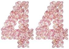 Arabski liczebnik 44, czterdzieści cztery, od kwiatów hortensja, odizolowywających na białym tle obrazy stock