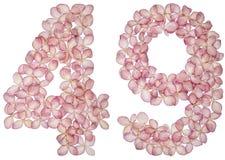 Arabski liczebnik 49, czterdzieści dziewięć, od kwiatów hortensja, odizolowywających na białym tle zdjęcia royalty free
