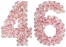 Arabski liczebnik 46, czterdzieści sześć, od kwiatów hortensja, odizolowywających na białym tle zdjęcie stock