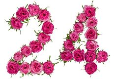 Arabski liczebnik 24, dwadzieścia cztery, od czerwonych kwiatów wzrastał, isolat Obrazy Stock