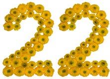 Arabski liczebnik 22, dwadzieścia dwa, od żółtych kwiatów jaskier, Zdjęcie Stock