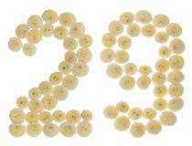 Arabski liczebnik 29, dwadzieścia dziewięć, od kremowych kwiatów chrysanthe Obraz Royalty Free