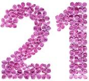 Arabski liczebnik 21, dwadzieścia jeden, od kwiatów bez, odizolowywał o Fotografia Royalty Free
