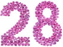 Arabski liczebnik 28, dwadzieścia osiem, od kwiatów bez, odizolowywających Zdjęcia Royalty Free