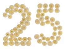 Arabski liczebnik 25, dwadzieścia pięć, od kremowych kwiatów chrysanthe Zdjęcie Royalty Free