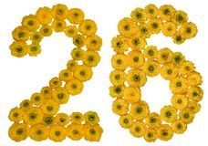 Arabski liczebnik 26, dwadzieścia sześć, od żółtych kwiatów jaskier, Zdjęcia Royalty Free