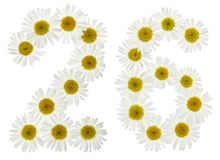Arabski liczebnik 26, dwadzieścia sześć, od białych kwiatów chamomile, Fotografia Royalty Free