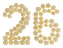 Arabski liczebnik 26, dwadzieścia sześć, od kremowych kwiatów chrysanthem Fotografia Stock