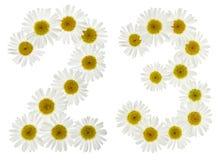 Arabski liczebnik 23, dwadzieścia trzy, od białych kwiatów chamomile Zdjęcie Stock