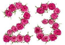 Arabski liczebnik 23, dwadzieścia trzy, od czerwonych kwiatów wzrastał, isola Obrazy Royalty Free