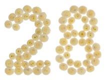 Arabski liczebnik 28, dwadzieścia osiem, od kremowych kwiatów chrysanth Zdjęcia Royalty Free