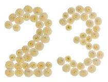Arabski liczebnik 23, dwadzieścia trzy, od kremowych kwiatów chrysanth Fotografia Stock