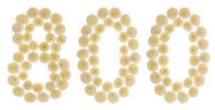 Arabski liczebnik 800, osiemset, od kremowych kwiatów chrysan Obrazy Stock