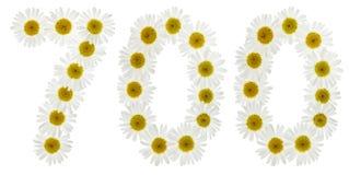 Arabski liczebnik 700, siedemset, od białych kwiatów chamomi Zdjęcie Royalty Free