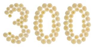 Arabski liczebnik 300, trzysta, od kremowych kwiatów chrysan Obrazy Royalty Free