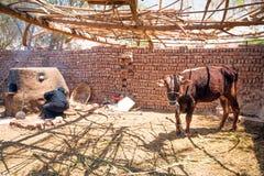 Arabskiej kobiety wypiekowy chleb w beduińskiej wiosce zdjęcia stock