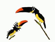 Aracari Photographie stock libre de droits