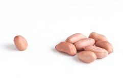 arachid zdjęcia stock
