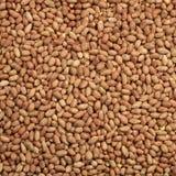arachid solący Fotografia Stock