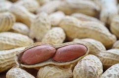 arachid strugający Obraz Royalty Free
