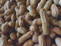 arachide Photographie stock libre de droits