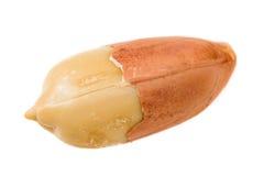 Arachide avec la peau Image libre de droits
