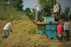 Arachide che coltiva nel Gujarat, India Immagine Stock