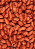 Arachide d'un rouge ardent Image libre de droits
