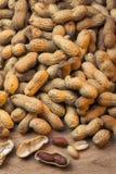 Arachides Image libre de droits
