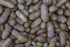 Arachides Photographie stock