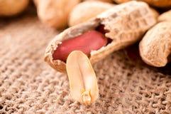 Arachides de Shell photo stock