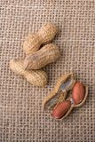 Arachides ouvertes criquées avec la coquille sur une toile de toile Image stock