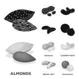 Arachidi, anacardii, noci del Brasile, noce di macadamia Generi differenti di icone stabilite della raccolta dei dadi nel nero, v Immagine Stock