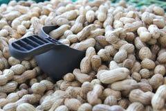Arachidi in serie al mercato dell'agricoltore Fotografia Stock Libera da Diritti