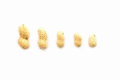 Arachidi sistemate da grande a piccolo Fotografia Stock Libera da Diritti