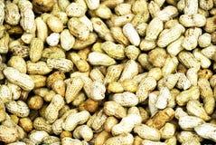 arachidy fotografia stock