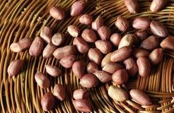 arachidy zdjęcie stock