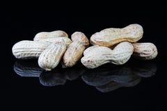 Arachidy arachidowi na odosobnionym czerni lustrze odzwierciedlali odbijającego tło Obraz Royalty Free
