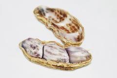 arachidy biały Obrazy Royalty Free