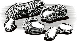 Arachidy, niektóre bez skorupy opiera przeciw stołowi ilustracja wektor