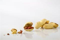 arachidy piec solili zdjęcia royalty free