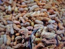 Arachidy z brown skorupami Zdjęcie Stock