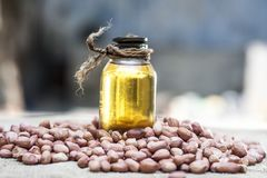 [Arachis hypogaea] Raw Groundnut in a clay bowl with groundnut oil on a gunny background. Royalty Free Stock Images