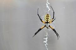 Arachnid κήπων κάθεται σε έναν Ιστό Στοκ φωτογραφία με δικαίωμα ελεύθερης χρήσης