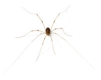 Arachnid Royalty Free Stock Photo