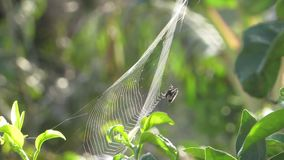 Arachnid insect web. Video of arachnid insect web stock video